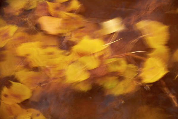 Wall Art - Photograph - Abstract Leaves by Paul Freidlund