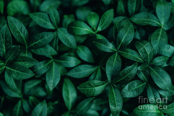 Wall Art - Photograph - Abstract Natural Leaves Background.  by Jelena Jovanovic