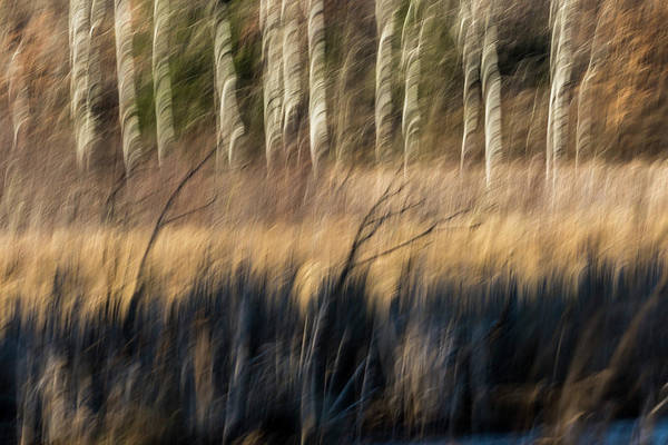 Wall Art - Photograph - Abstract Of Birch At The Edge Of The Marsh 2018-1 by Thomas Young
