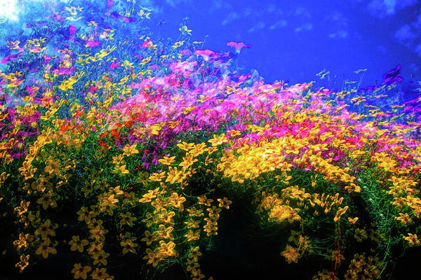 Flower Beds Photograph - Abstract Of Colored Flowers by David Smith