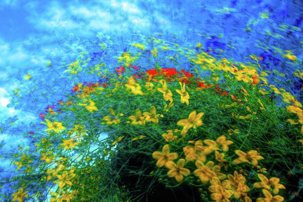 Wall Art - Photograph - Abstract Of  Yellow And Red Flowers by David Smith