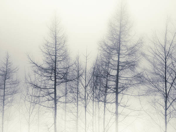 Horizontal Abstract Photograph - Abstract Trees In Winter by Inhiu All Rights Reserved