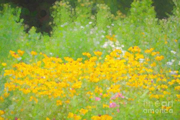 Wall Art - Photograph - Abstract Wildflowers  by Leslie Gatson-Mudd