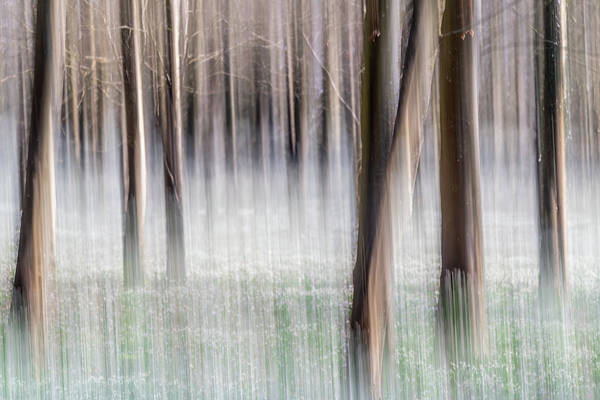 Photograph - Abstract Woodland by Framing Places