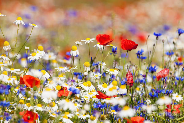Color Field Wall Art - Photograph - Abundance Of Blooming Wild Flowers On by Courtyardpix