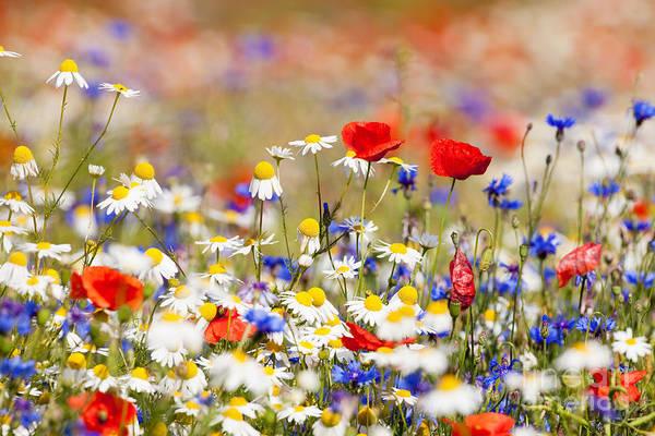 Wall Art - Photograph - Abundance Of Blooming Wild Flowers On by Courtyardpix