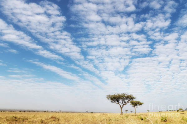 Wall Art - Photograph - Acacia Trees In The Masai Mara by Jane Rix