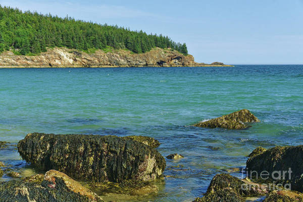 Wall Art - Photograph - Acadia Coast by Dale Kohler