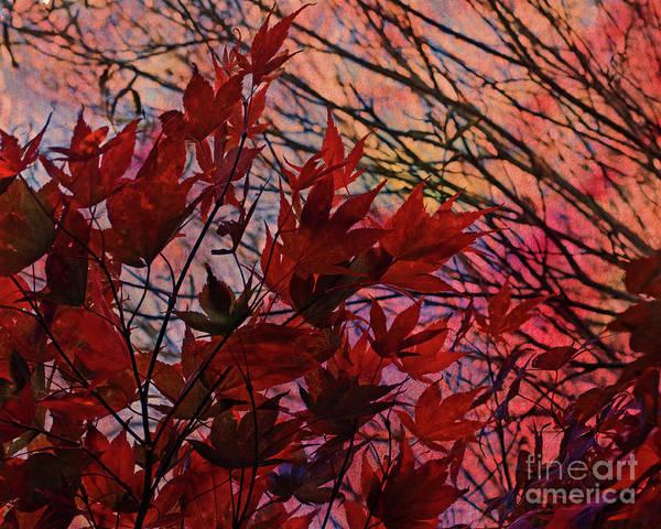 Digital Art - Acer In Autumn by Liz Alderdice