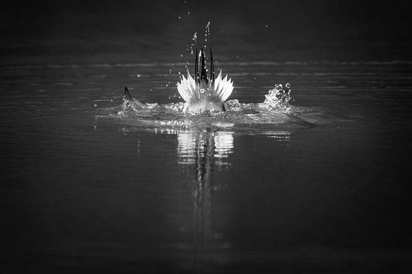 Photograph - Across The Water by Todd Henson