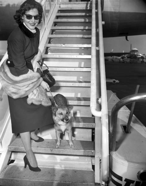 Queen Photograph - Actress Ava Gardner And Her Dog, Rags by New York Daily News Archive