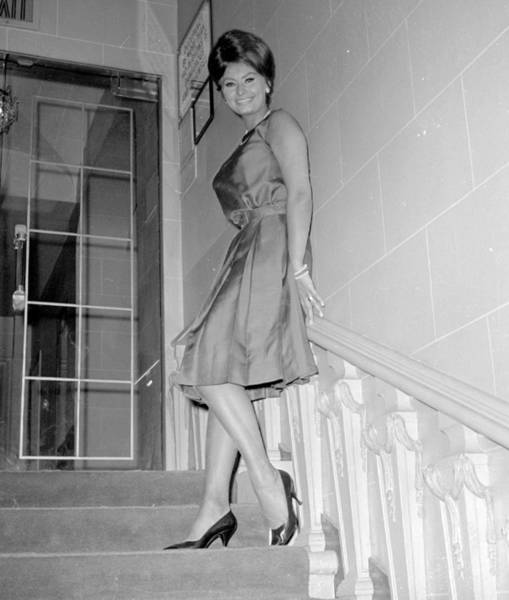Photograph - Actress Sophia Loren At The by New York Daily News Archive