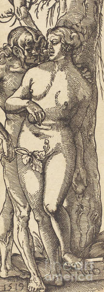 Wall Art - Drawing - Adam And Eve, 1519 By Grien by Hans Baldung Grien