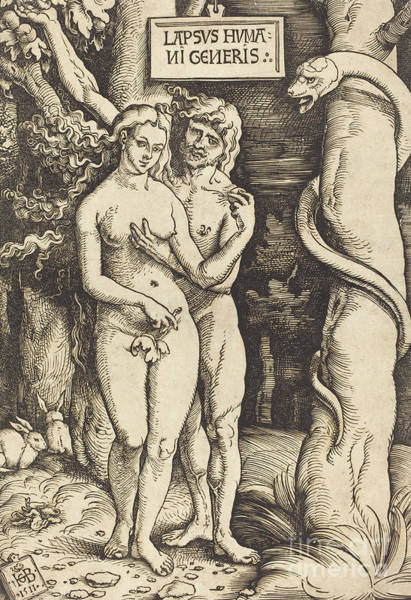 Wall Art - Drawing - Adam And Eve By Hans Baldung Grien by Hans Baldung Grien