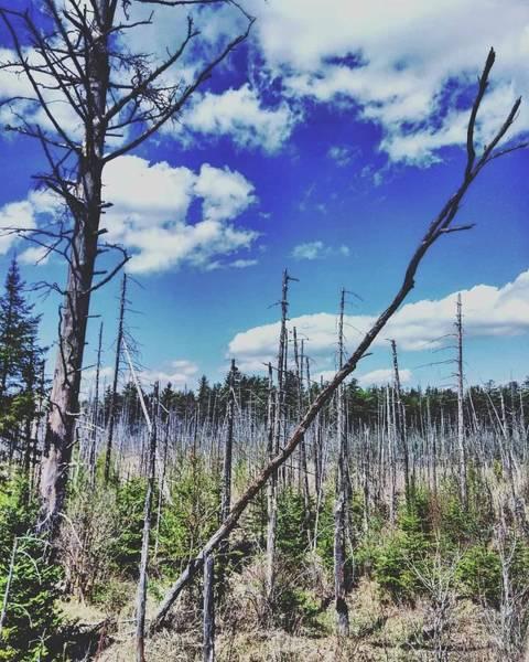 Adirondack Mountains Digital Art - Adirondack Wild by Brenden Kirch