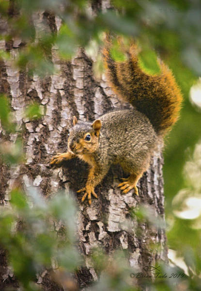 Photograph - Adorable Intruder, Editor's Favorite, National Geographic Your Shot by Brian Tada