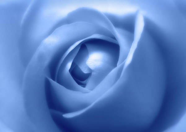 Photograph - Adorable Soft Blue Rose  by Johanna Hurmerinta