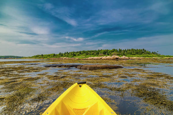 Wall Art - Photograph - Adventurous Kayak In Maine by Betsy Knapp