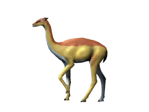 Photograph - Aepycamelus Giraffinus, Camel, Miocene by Nobumichi Tamura