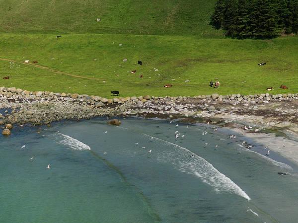 Sea Cow Photograph - Aerial Of Cows By Beach by Erika Tirén/magic Air