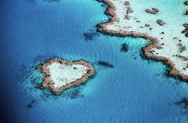 Reef Photograph - Aerial Of Heart-shaped Reef, Hardy by Holger Leue