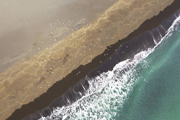 The Edge Photograph - Aerial View Arctic Terns Sterna by Werner Van Steen