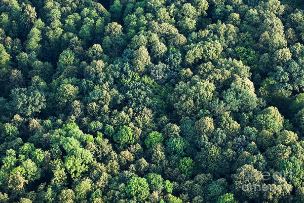 Wall Art - Photograph - Aerial View Of  Forest by Mariusz Szczygiel