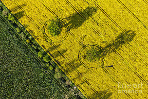 Wall Art - Photograph - Aerial View Of Harvest Fields In Poland by Mariusz Szczygiel