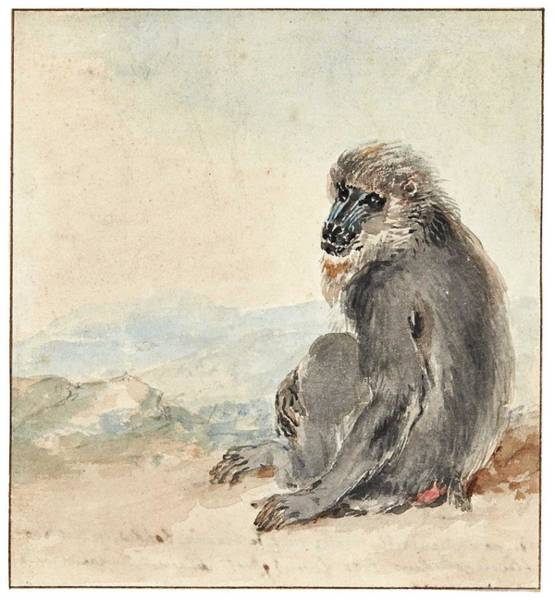 Wall Art - Painting - Aert Schouman A Female Mandrill  Mandrillus Sphinx  by Celestial Images