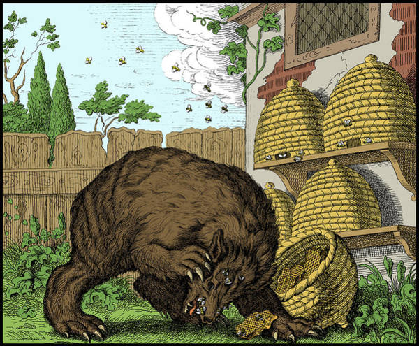 Wall Art - Photograph - Aesop Fable, The Bear And The Beehives by Science Source