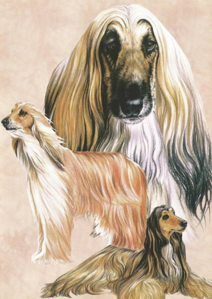 Drawing - Afghan Hound Alteration by Barbara Keith