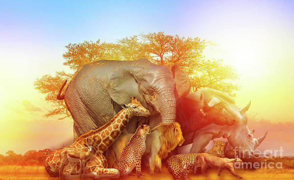 Photograph - African Animals Collage Sunset by Benny Marty