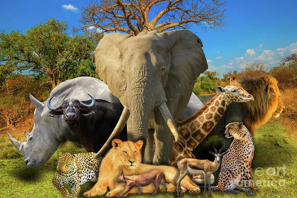 Photograph - African Animals Nature Background by Benny Marty