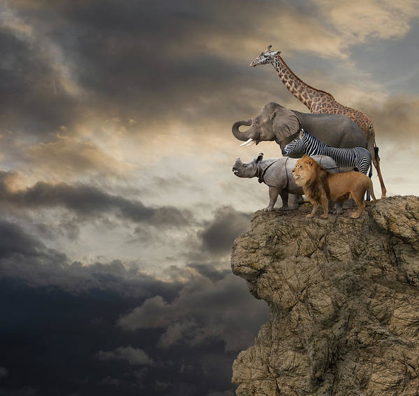 Sausalito Wall Art - Photograph - African Animals On The Edge Of A Cliff by John Lund