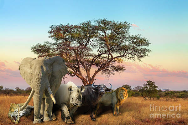 Photograph - African Big Five Sunset by Benny Marty