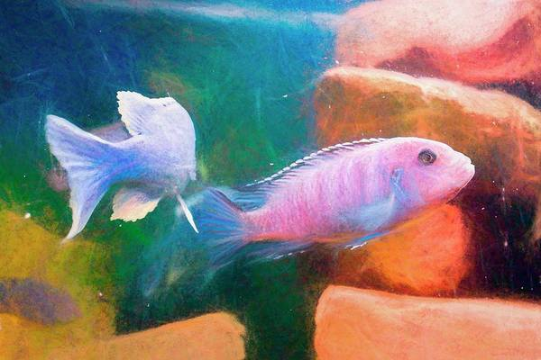 Digital Art - African Cichlid Art Chalk Smudge by Don Northup
