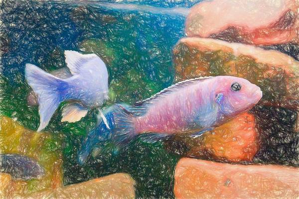 Digital Art - African Cichlid Art Colored Pencil by Don Northup