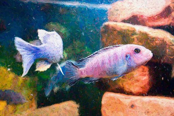Digital Art - African Cichlid Art Hopper by Don Northup