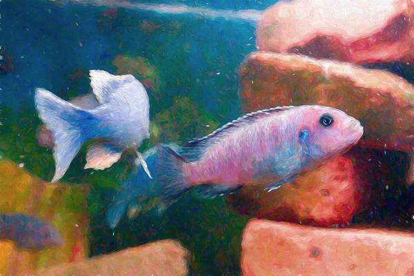 Digital Art - African Cichlid Art Painterly by Don Northup