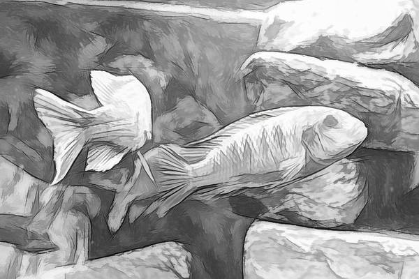 Digital Art - African Cichlid Artsy Sketch by Don Northup