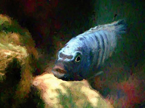 Digital Art - African Cichlid Blue Zebra Hopper by Don Northup