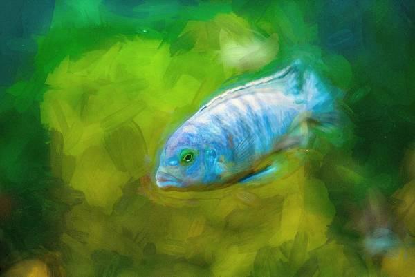 Digital Art - African Cichlid Blue Zebra Impasto by Don Northup