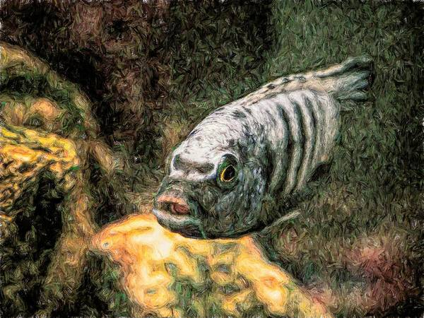 Digital Art - African Cichlid Blue Zebra Toned by Don Northup