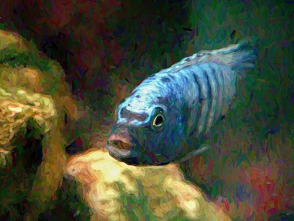 Digital Art - African Cichlid Blue Zebra Van Gogh by Don Northup