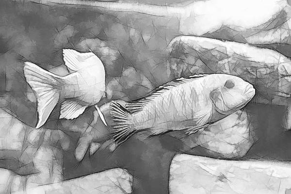 Digital Art - African Cichlid Sketch Art by Don Northup