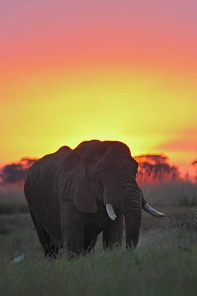 Chobe National Park Wall Art - Photograph - African Elephant by Winfried Wisniewski