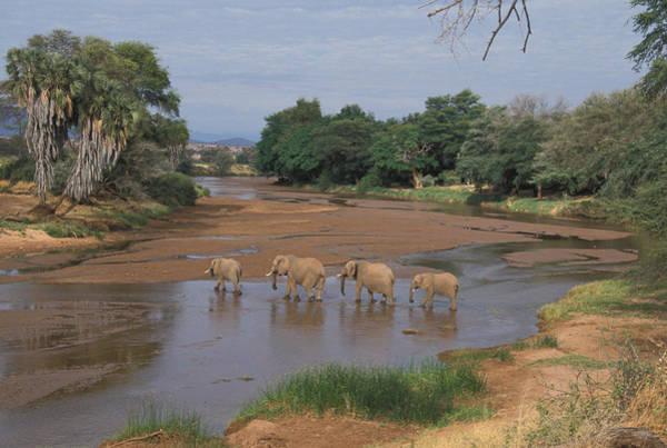 Wall Art - Photograph - African Elephants by David Hosking