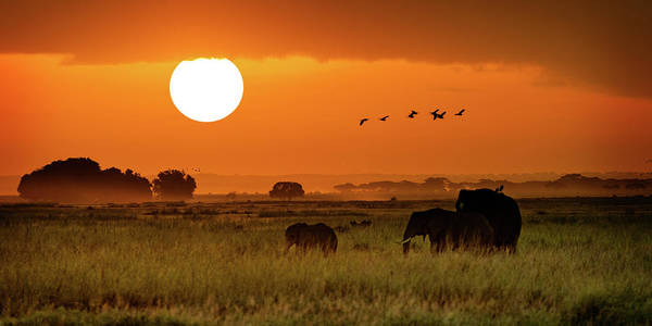 Wall Art - Photograph - African Elephants Walking At Golden Sunrise by Susan Schmitz