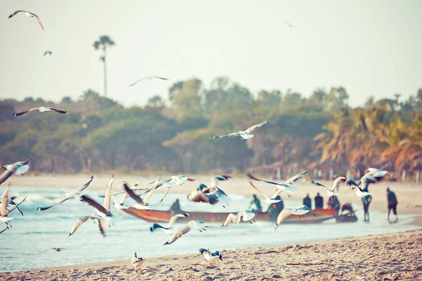 Fishing Boat Photograph - African Fishing Boat And Seabirds by Peeterv