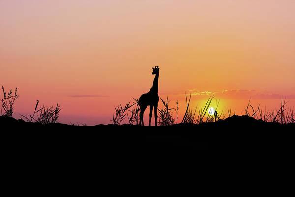 Wall Art - Photograph -  African Giraffe by Art Spectrum